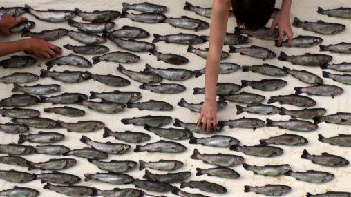 100 fish